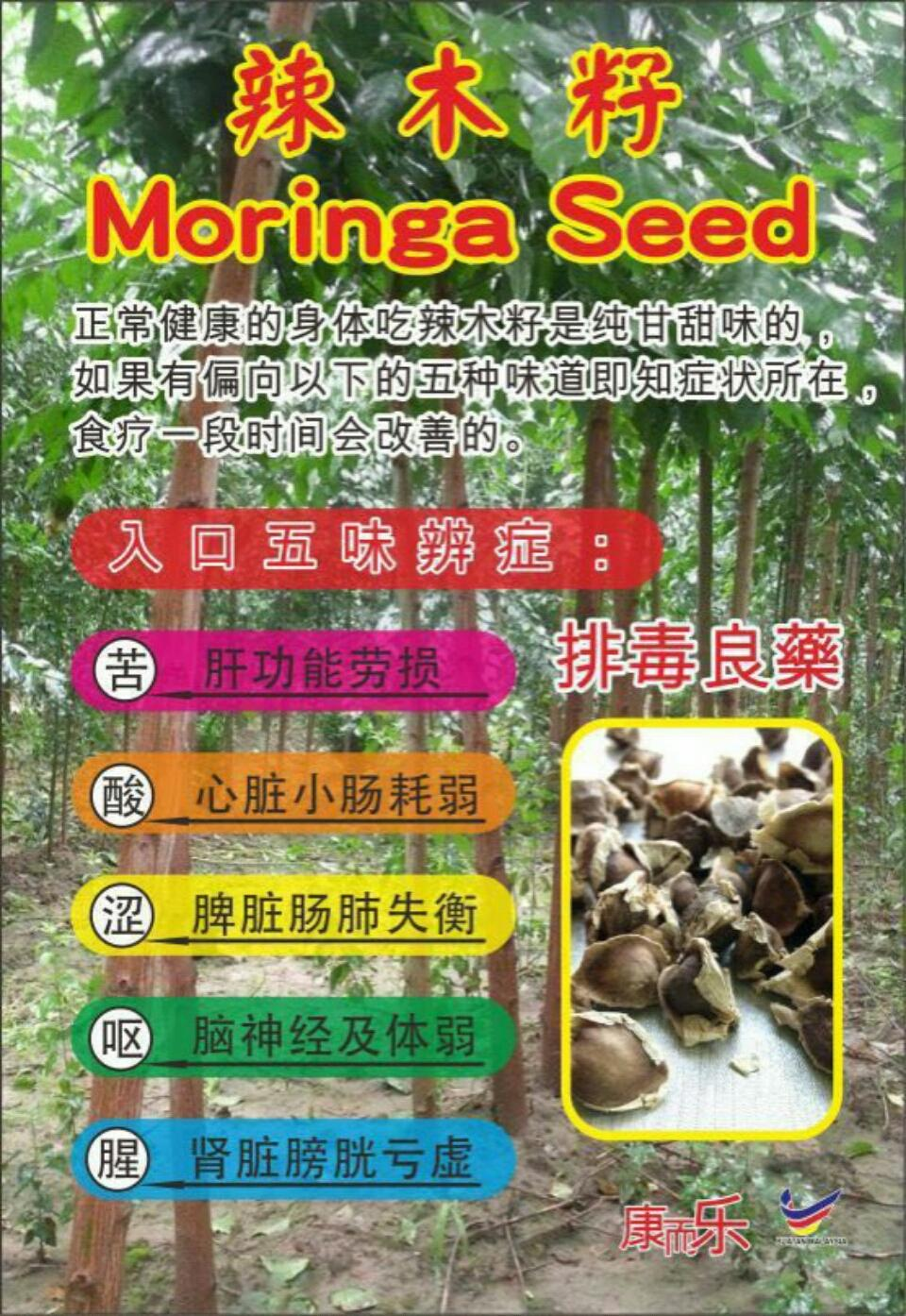 Moringa Seeds 500g 辣木籽 Natural Health Supplement